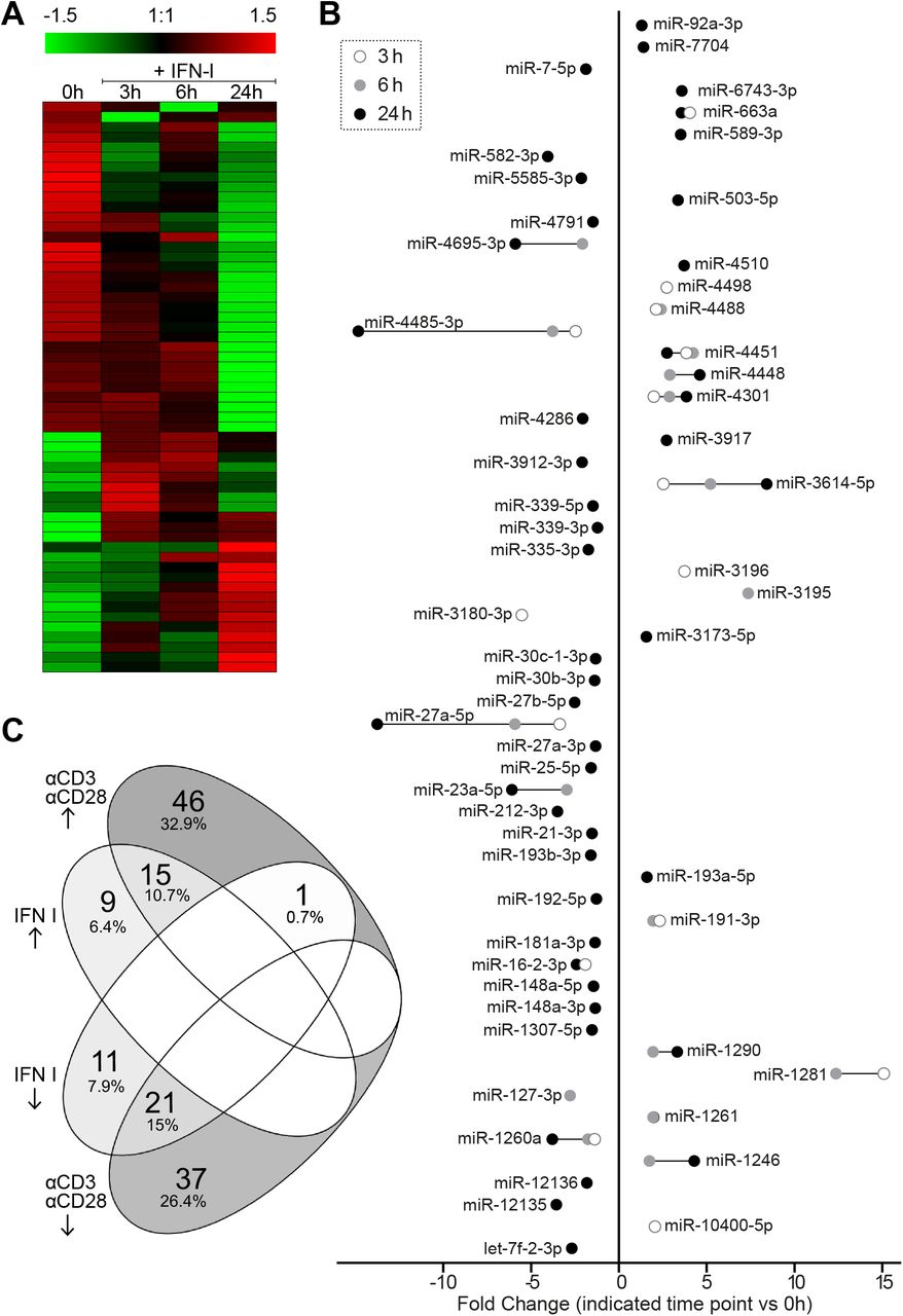 Differential miRNA expression 3h, 6h and 24h after IFN I stimulation of human primary CD4+ T cells. A) Heat map for differentially expressed miRNAs. The heatmap represents relative expression values for a non-redundant collection of differentially expressed miRNAs (adjusted p-value