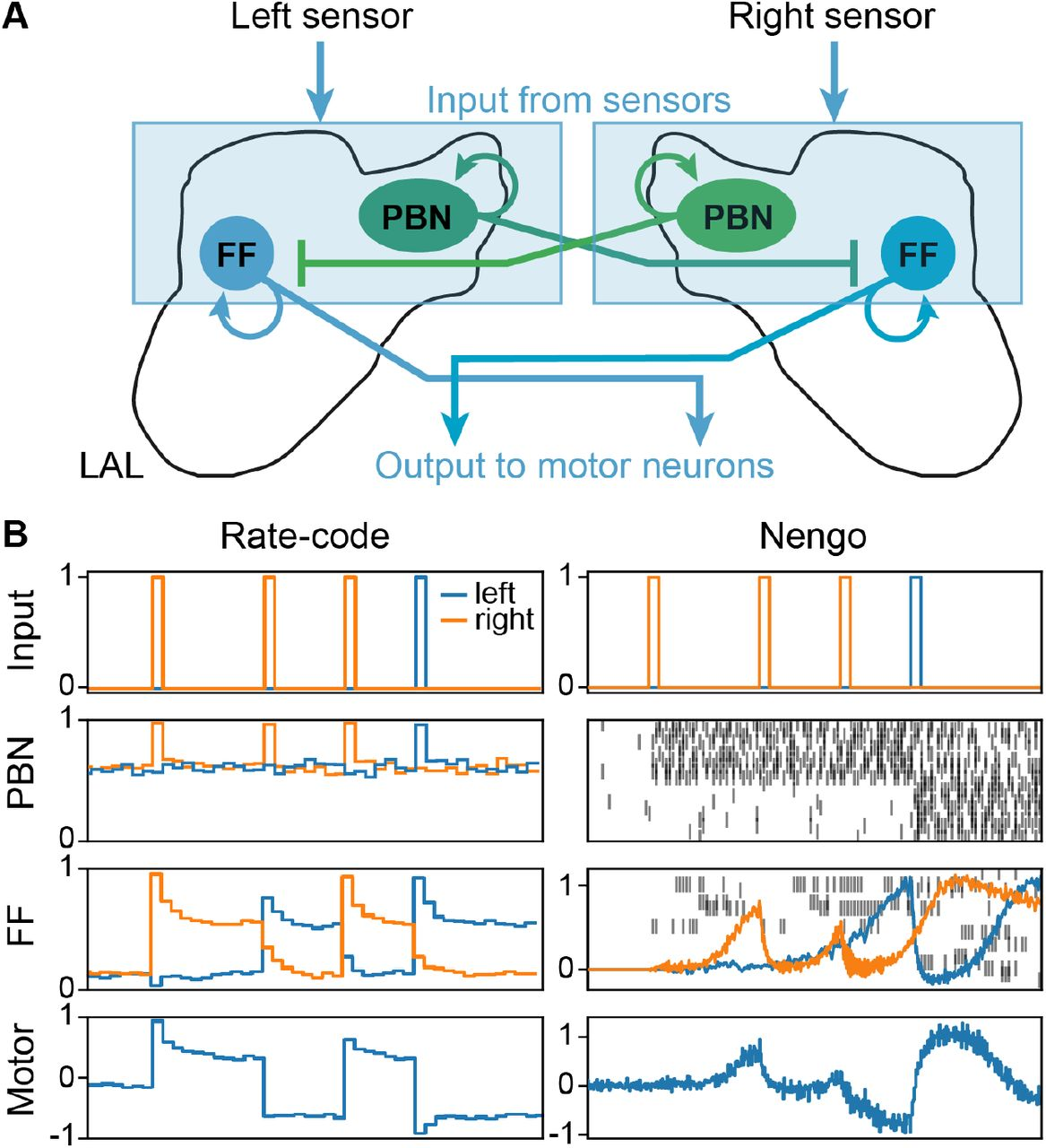 A neural model for insect steering applied to olfaction and path ...