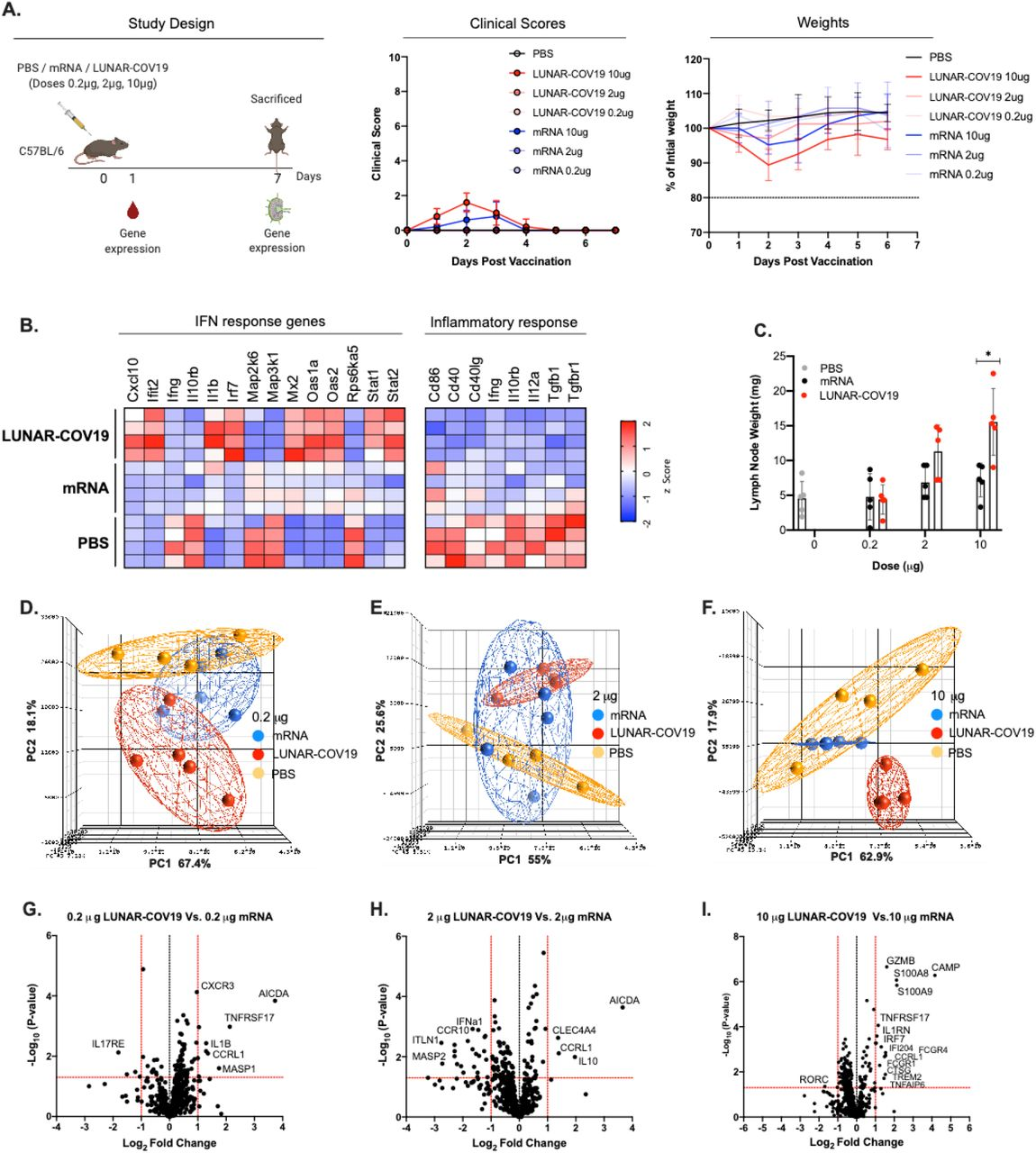 Clinical Scores, mouse weights and transcriptomic analysis of immune genes following vaccination with LUNAR-COV19 or conventional mRNA SARS-CoV-2 vaccine candidates. A) C57BL/6 mice ( n =5/group) were immunized with either PBS, mRNA or LUNAR-COV19 (doses 0.2 μg, 2 μg or 10 μg), weight and clinical scores assessed every day, bled at day 1 post-immunization, sacrificed at 7 days post-vaccination and lymph nodes harvested. Gene expression of inflammatory genes and immune genes were measured in whole blood (at day 1) and lymph nodes (at day 7), respectively. B ) Expression of IFN and inflammatory response genes in whole blood presented as heatmap of z scores. C) Lymph node weights at 7 days post-vaccination. Principal component analysis (PCA) of immune gene expression following vaccination with conventional mRNA or LUNAR-COV19 at doses D) 0.2 μg, E) 2 μg and F) 10 μg. Volcano plots of fold change of LUNAR-COV19 versus conventional mRNA (x-axis) and Log 10 P -value of LUNAR-COV19 versus conventional mRNA (y-axis) for doses G) 0.2 μg, H) 2 μg and I) 10 μg. Study design schematic diagram created with BioRender.com. Weights of lymph nodes were compared between groups using a two-tailed Mann-Whitney U test with * denoting 0.05