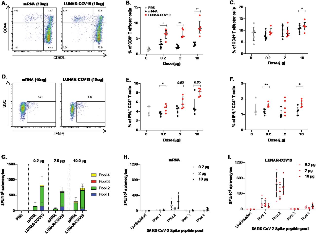 Cellular immune responses following vaccination with LUNAR-COV19 and conventional mRNA. C57BL/6 mice ( n =5 per group) were immunized with 0.2 μg, 2.0 μg, or 10.0 μg of LUNAR-COV19 or conventional mRNA via IM, sacrificed at day 7 post-vaccination and spleens analyzed for cellular T cell responses by flow-cytometry and ELISPOT. A-B ) CD8 + and C ) CD4 + T effector cells were assessed in vaccinated animals using surface staining for T cell markers and flow-cytometry. D-E ) IFNγ + CD8 + T cells and F ) Ratio of IFNγ + / IL4 + CD4 + T cells in spleens of immunized mice were assessed following ex vivo stimulation with PMA/IO and intracellular staining. G-I ) SARS-CoV-2 S protein-specific responses to pooled S protein peptides were assessed using IFNγ ELISPOT assays following vaccination with mRNA ( H ) or LUNAR-COV19 ( I ). Percentage of CD8+ cells, CD4+ cells, IFNγ and IL4 producing T cells were compared between groups using two-tailed Mann-Whitney U test with * denoting 0.05