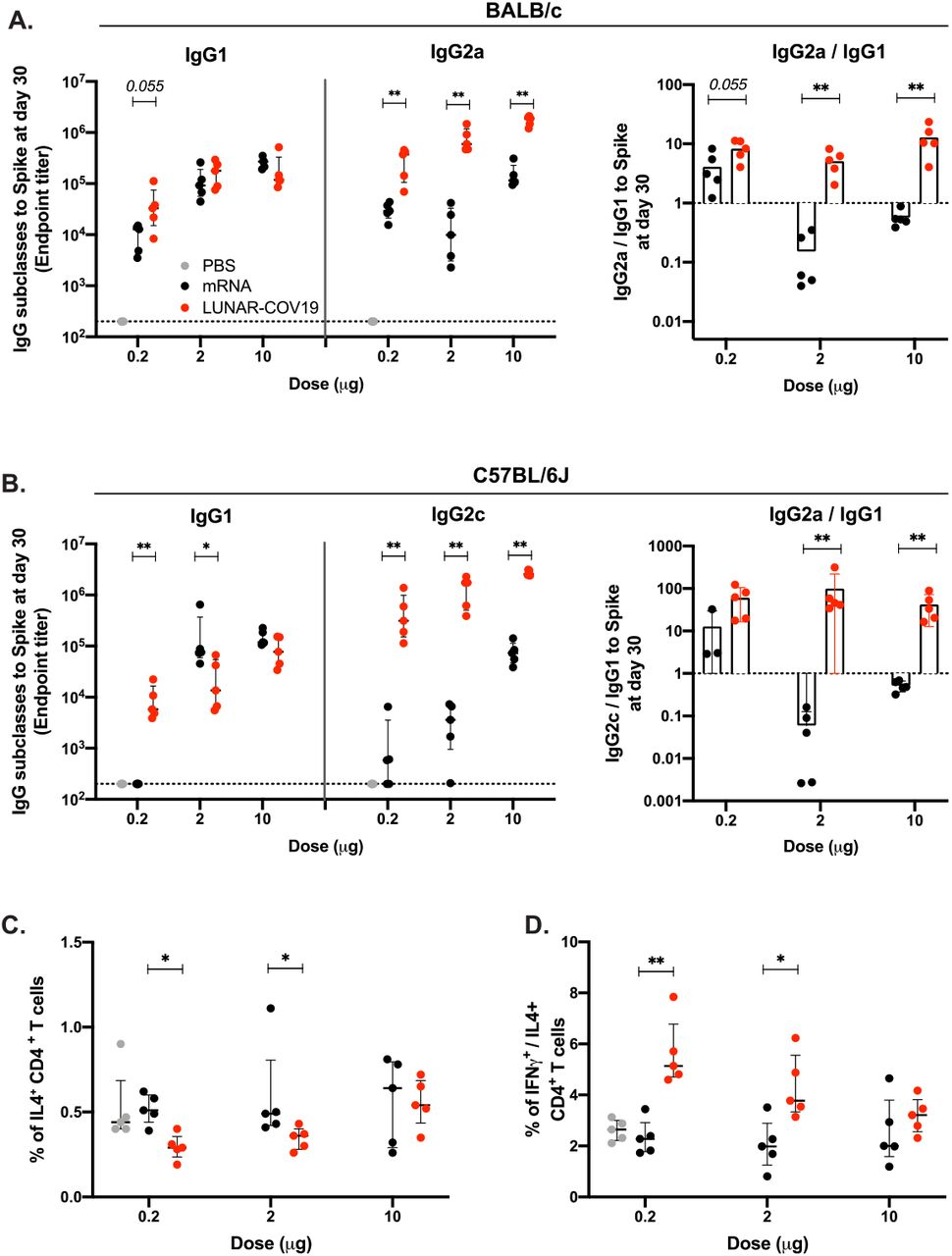 LUNAR-COV19 elicits Th1 biased immune responses. SARS-CoV-2 spike-specific IgG subclasses and the ratio of IgG2a/c/IgG1 at 30 days post-vaccination with LUNAR-COV19 and conventional mRNA in A ) BALB/c and B ) C57BL/6J mice. Th2 cytokine and Th1/Th2 skew in CD4 T cells at day 7 post-vaccination in C57BL/6J mice measured by ICS as C ) percentage of IL4+ CD4 T cells and D ) ratio of IFNγ + /IL4 + CD4 + T cells. Antibody titers and T cell data were compared between groups using a two-tailed Mann-Whitney U test with * denoting 0.05