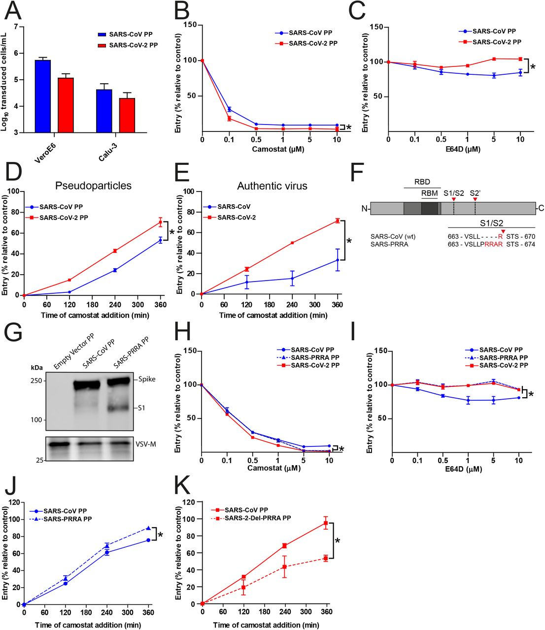 SARS-CoV-2 enters faster on Calu-3 cells than SARS-CoV and entry speed is increased by the multibasic cleavage site. ( A ) SARS-CoV PP and SARS-CoV-2 PP infectivity on VeroE6 and Calu-3 cells. ( B and C ) SARS-CoV PP and SARS-CoV-2 PP entry route on Calu-3 cells. Cells were pretreated with a concentration range of camostat ( B ) or E64D ( C ) to inhibit serine proteases and cathepsins, respectively. T-test was performed for statistical analysis at the highest concentration. * P