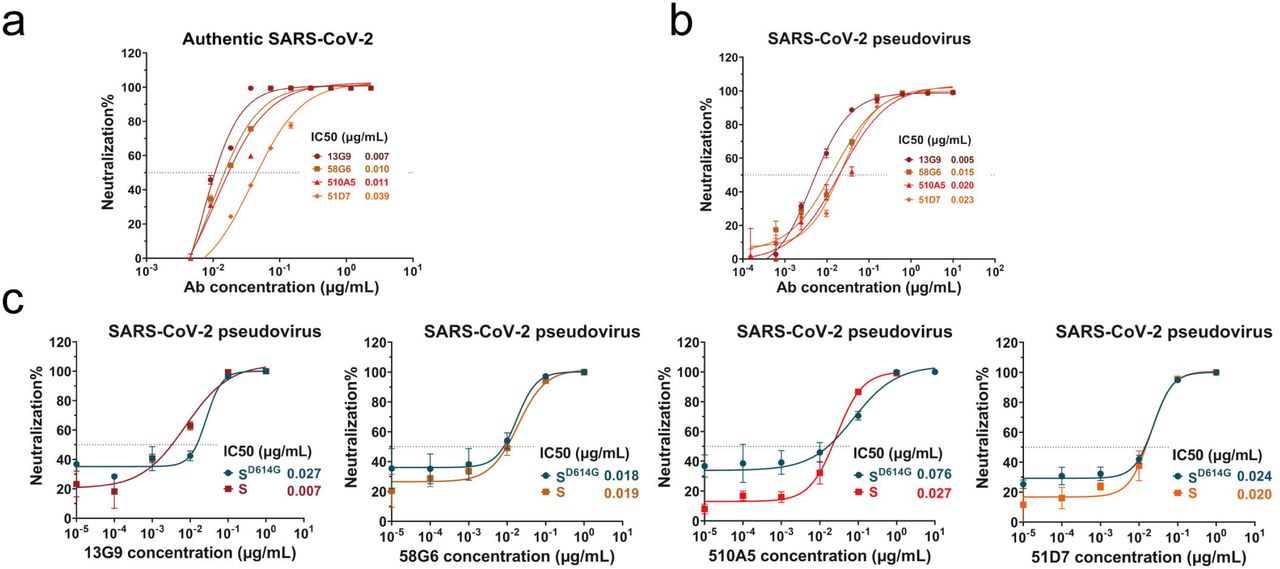 Assessment of the neutralizing capabilities of the NAbs against SARS-CoV-2 and its mutated S D614G . Neutralizing potency measured by the neutralization assay against authentic SARS-CoV-2 (a), SARS-CoV-2 pseudovirus (b) and its mutated type S D614G (c). Data for each NAb were obtained from a representative neutralization experiment, with three replicates. Data are presented as mean ± SEM.