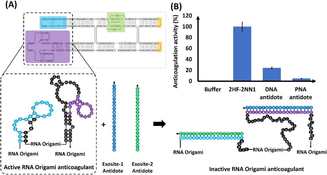 Reversibility of RNA origami anticoagulation via ssDNA and ssPNA antidotes. (A) 2D illustration of active and inactive 2HF-2NN1 anticoagulant. Exosite-1 and 2 aptamers are highlighted in purple and blue, respectively. (B) Recovery of thrombin activity by addition of specific DNA and PNA antidotes. Percent activity remaining +/− standard deviation.