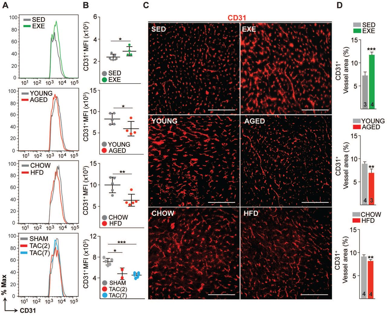 Effects of exercise training, aging, obesity and pressure overload on cardiac endothelial cell number and vascular density. A-B. FACS analysis and quantification of mean fluorescence intensity (MFI) of the cardiac endothelial cells (CD31+CD140a-CD45-Ter119-DAPI-) in various mice models. C-D. Representative immunofluorescence images and quantification of CD31+ blood vessel area (%) in the heart. Scale bar, 100μm. Data is presented as mean ± SEM. Student's t test was used, *p