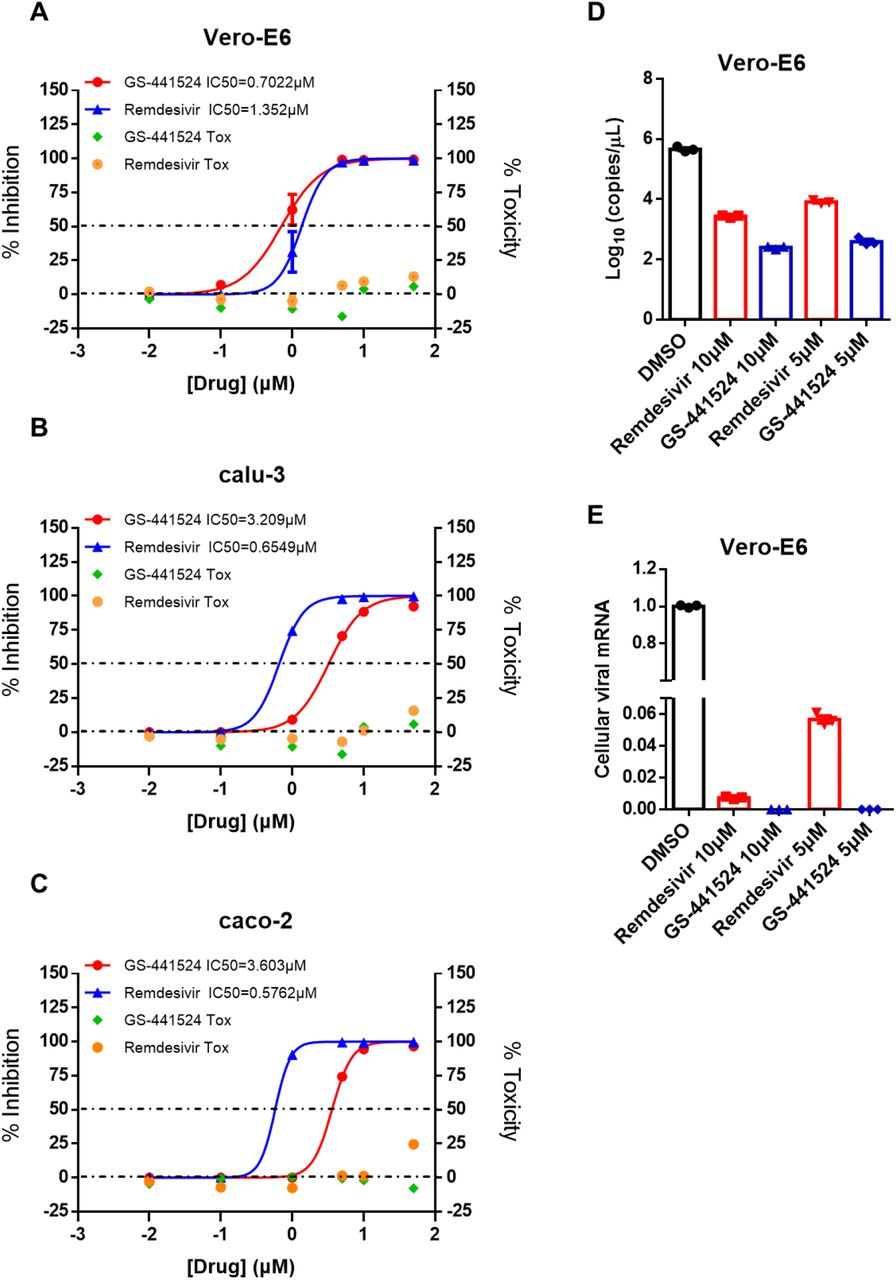 The prodrug remdesivir and parent nucleoside GS-441524 potently inhibit SARS-CoV-2 replication in vitro . Vero-E6 ( A ), calu-3 ( B ) and caco-2 ( C ) were infected with SARS-CoV-2 at an MOI of 0.05 and treated with different drugs (GS-441524 and Remdesivir) at different doses (0, 0.01, 0.1, 1, 5, 10, 50 μM) for 48 h. The viral yield in the cell supernatant was then quantified by qRT-PCR. Data represented are the mean value of % inhibition of SARS-CoV-2 on cells. At the same time, the cytotoxicity at different concentrations of drugs was tested. Vero-E6 cells were infected with SARS-CoV-2 at an MOI of 0.05 and treated with different doses (0, 5, 10 μM) of the indicated compounds for 48 h. The viral RNA in the cell supernatant ( D ) and intracellular ( E ) was then quantified by qRT-PCR.