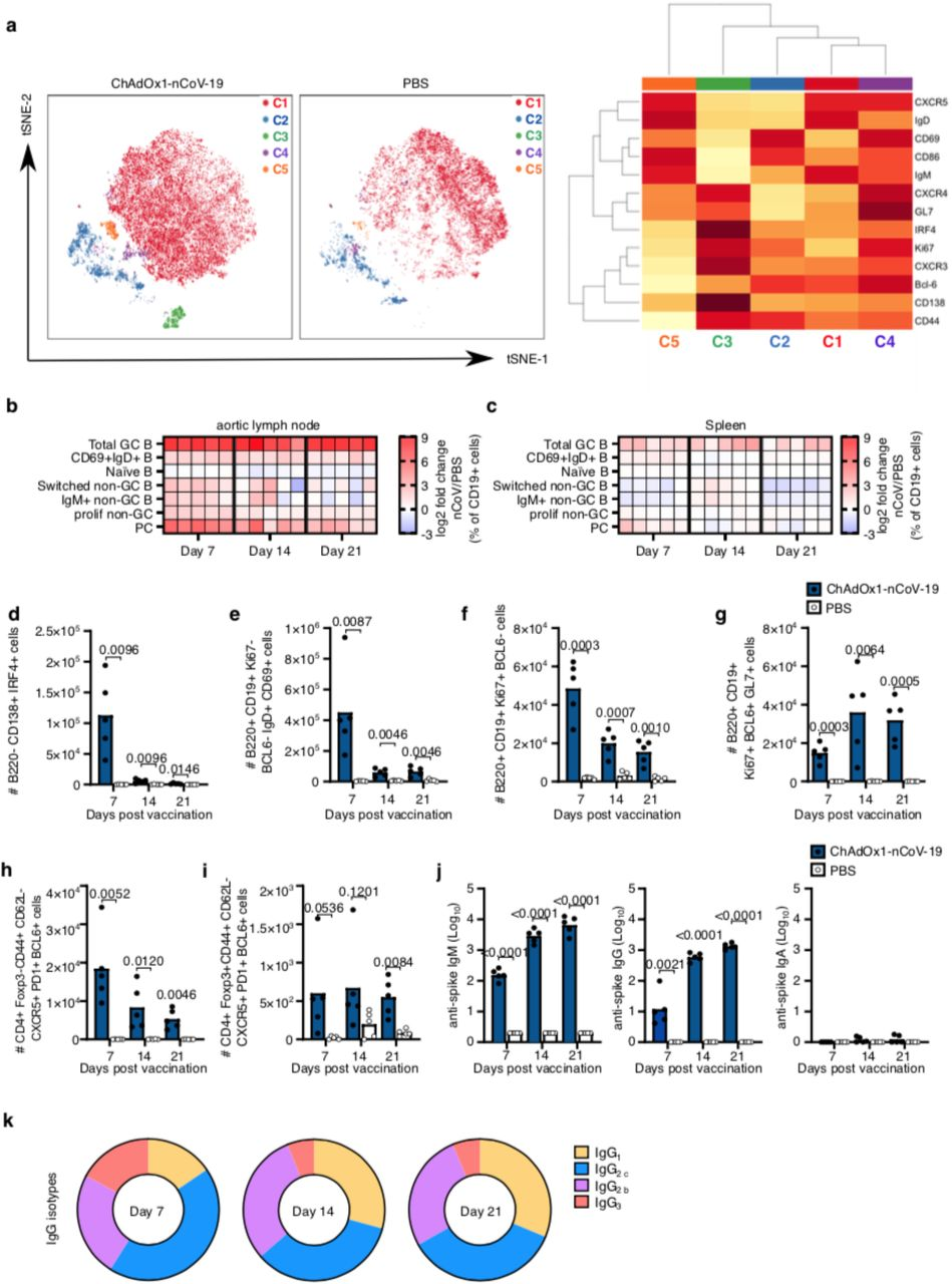 ChAdOx1 nCoV-19 induces a plasma cell and germinal centre B cell response a. tSNE/FlowSOM analyses of CD19 + B cells from 3-month-old (3mo) mice seven days after immunization with ChAdOx1 nCoV-19 or PBS. Heatmaps of the manually gated B cell populations indicated at seven, 14 and 21 days after immunisation in the aortic lymph node ( b ) and spleen ( c ). Here the frequency of each cell subset in each ChAdOx1 nCoV-19 immunised mouse has been expressed as the log2 fold change over the average frequency in PBS immunised mice (n=5). Bar charts showing the total number of plasma cells ( d ), CD69 + IgD + B cells ( e ), proliferating non-germinal centre B cells ( f ) and germinal centre B cells ( g ) at the indicated time points after immunization. Number of T follicular helper ( h ) and T follicular regulatory cells ( i ) at the indicated time points postimmunisation. Serum anti-spike IgM, IgG, and IgA ( j ) antibodies seven, 14 and 21 days after immunization. k . Pie charts indicating the mean abundance of each IgG antibody subclass in the serum at the indicated time points after immunisation. In d-j bar height in corresponds to the mean and each circle represents one biological replicate. P-values are calculated using a student's t-test with Holm-Sidak multiple testing correction, for ELISA data analyses were done on log transformed values.