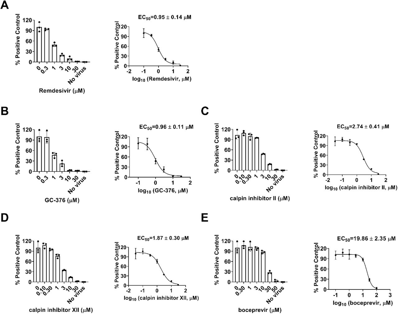 Dose-dependent inhibitory effect of boceprevir, calpain inhibitors II and XII, and GC-376 on HCoV-NL63 viral RNA synthesis in RT-qPCR assay. Positive control remdesivir (A); GC-376 (B); Calpain inhibitor II (C); Calpain inhibitor XII (D); and Boceprevir (E). The left figures represent the normalized RNA levels of the average of three repeats from each concentration tested, and EC 50 curve fittings using log (concentration of inhibitors) vs normalized RNA levels with variable slopes in prism 8 were shown in the right figures. Data are mean ± standard deviation of three replicates.