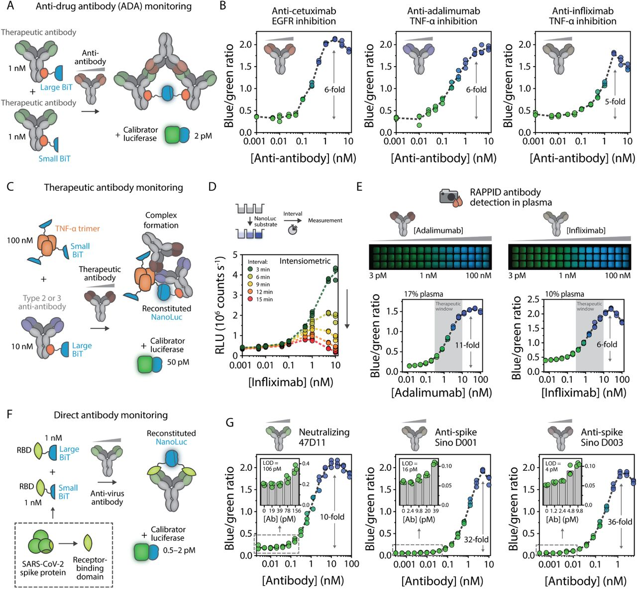 RAPPID enables versatile monitoring of clinically relevant antibodies. a , Schematic overview of RAPPID sensors for the detection of anti-drug antibodies (ADAs). Use of a commercially available therapeutic antibody conjugated to both Gx-LB and Gx-SB enables binding of the ADA and formation of a luminescent ternary complex. b , Ratiometric sensor response curves of RAPPID sensors for anti-cetuximab, anti-adalimumab, and anti-infliximab, respectively. c , Schematic overview of RAPPID sensors for detection of therapeutic antibodies adalimumab and infliximab using target antigen TNFα fused to SB, and the anti-antibody conjugated to Gx-LB. d , Intensiometric detection of infliximab without calibrator luciferase. Luminescent measurements were performed at various intervals following addition of the NanoLuc substrate. e , Sensor response for adalimumab (left) and infliximab (right) detection in diluted plasma. The same sample was used for detection with a digital camera (top) and the plate reader (bottom). f , Schematic overview of RAPPID sensors for direct monitoring of anti-virus antibodies against the receptor binding domain (RBD) of <t>SARS-CoV-2</t> spike protein. LB and SB were expressed as fusion proteins with the RBD, enabling detection of all RBD-targeting antibodies. g , Ratiometric sensor response curves for neutralizing antibody 47D11 (left) 44 , and commercially available anti-spike <t>D001</t> (center) and D003 (right) 43 . Insets show sensor response at low target concentrations, which allowed calculation of the limit of detection, as indicated in the graphs. Experiments in b , d , e , g were performed in triplicate at sensor and calibrator concentrations as indicated in a , c , f , respectively. Reaction mixtures were prepared in buffer (PBS (pH 7.4), 0.1% (w/v) BSA) and incubated for 1 hr at room temperature before addition of NanoLuc substrate and recording of the emission spectra. The blue/green ratio was calculated by dividing bioluminescent emission at