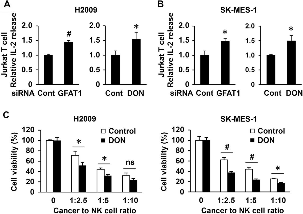 Knockdown of GFAT1 or DON treatment in cancer cells increases T cell activation and NK cell killing. ( A ) Cancer cells were seeded in triplicate in 24-well plates at a density of 5 × 10 4 cells/well. The next day, cells were transfected with control or GFAT1 siRNA for another 24 h. The cells were then incubated with media containing IFNγ (10 ng/ml) for 6 h. The medium was then removed and Jurkat T cells in medium with 25 ng/ml PMA and 200 ug/ml ionomycin were added to cancer cells. The ratio of cancer cell to T cell was 1:2 for H2009 and 1:4 for SK-MES-1. The next day (18 h for H2009 and 24 h for SK-MES-1), the media were collected for <t>ELISA</t> for <t>IL-2</t> concentration. For DON inhibition, 10 μM DON was added overnight before the treatment of IFNγ, the ratio of cancer cell to T cell was 1:3 and incubation time was 24 h for both cell lines ( B ). ( C ) Cancer cells were seeded and transfected with siRNAs and treated with IFNγ as described in (A). NK cells were added to cancer cells in the indicated ratio for 4 h. The media were refreshed and NK cells removed. MTT assay was carried out 24 h later. *, P