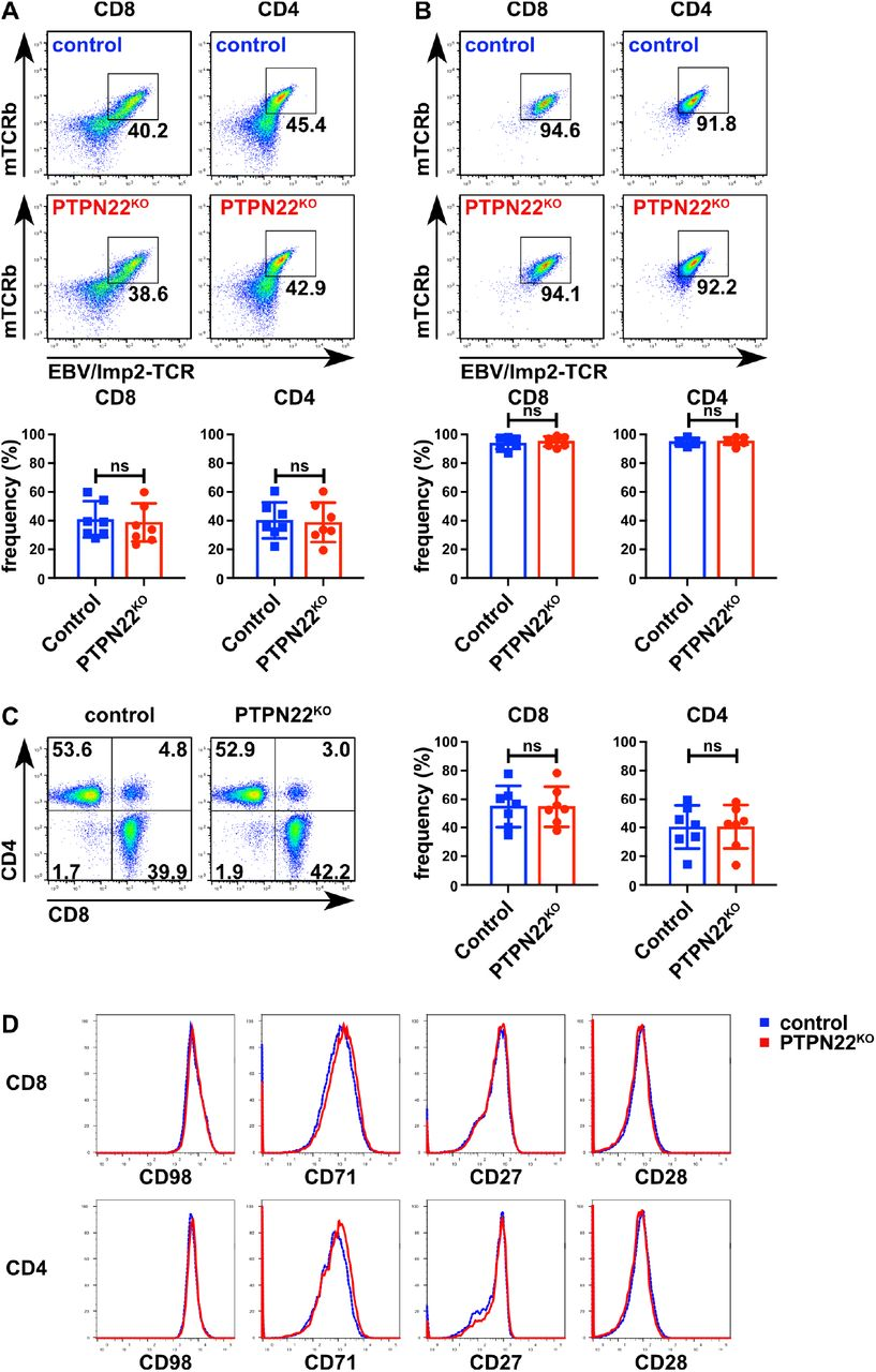 EBV/LMP2-specific PTPN22 KO and control T cells have similar CD8/CD4 frequencies and expression of surface markers (A-B) TCR expression was determined before (A) and after (B) magnetic enrichment using antibodies against mouse TCRβ chain. Bar charts below show data summarized from 7 donors. (C) Representative dot plots and bar charts of data pooled from 7 donors show the frequencies of CD8 and CD4 T cells in control and PTPN22 KO samples. (D) Expression of CD98, CD71, CD27, and CD28 was evaluated by cell surface staining and flow cytometry. Data are shown from one representative experiment from 3 different donors (two other donors are shown in Figure S1). Significance was determined using two-way ANOVA with Tukey's post test for multiple comparisons. ns = not significant