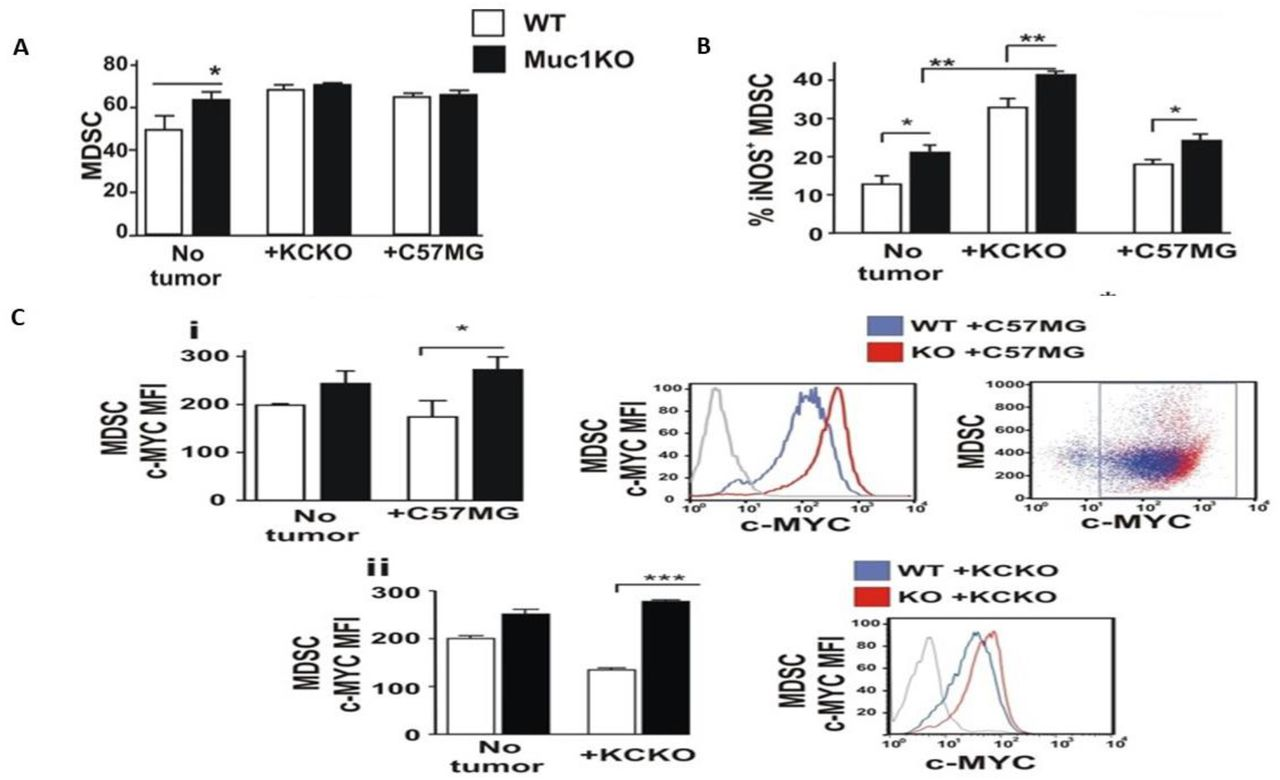 MDSCs from MUC1KO mice produce increased iNOS and c-Myc A) BM cells from healthy mice were isolated and labeled with antibodies against Gr1 and CD11b. B) Level of iNOS expression by MDSCs from the BM of healthy and tumor bearing mice. C) Level of c-Myc protein expression by MDSCs from the BM of healthy and tumor bearing mice.