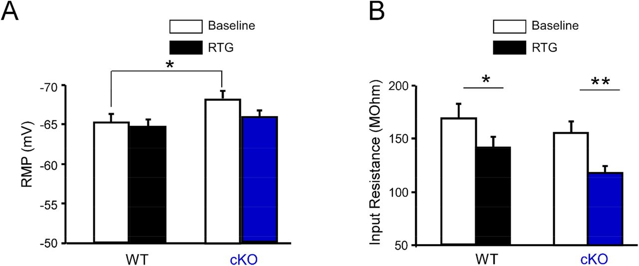 Effects of retigabine (RTG) on the passive membrane properties of hippocampal CA1-PCs in vitro. (A) Genotype had a significant effect on baseline RMP of CA1-PCs (n=19 for WT, n=24 cKO, * p