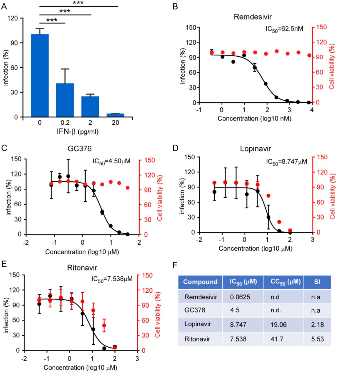 Inhibition of recombinant SARS-CoV-2 GFP/ΔN trVLP infection by IFN and antivirals. (A) IFN-β pretreated Caco-2-N int cells were subsequently infected with trVLP and cells were subjected to flow cytometry analysis for quantify the GFP fluorescence at 2 days post-infection. Error bars represent the standard deviations from three independent experiments (n=6). (B-E) Antiviral effect of remdesivir, GC376, lopinavir and ritonavir. The drug treated cells were infected with trVLP and GFP fluorescence was quantified at 48h after infection. The cytotoxic effect of each drug at indicated concentrations were determined by CellTiter-Glo cell viability assay. The virus infection or cytotoxicity is plotted versus compound concentration (n=3 biological replicates for all compounds). The black dots indicate replicate measurements, and the black lines indicate dose-response curve fits. The red dots indicate cytotoxicity. IC 50 values were calculated using Prism software and is representative of one of three independent experiments performed in triplicate. Three independent experiments had similar results. (F) Comparison of antiviral activity and cytotoxicity of each compound. Selectivity Index (SI), a ratio that compares a drug's cytotoxicity and antiviral activity was also calculated. n.d.=not detected; n.a.=not applicable.