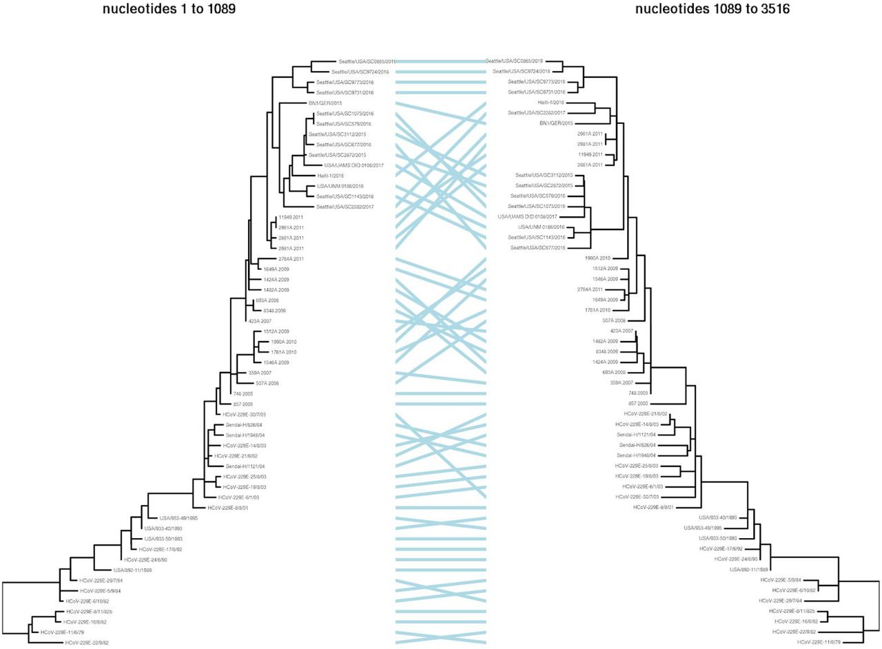 Although there is some evidence of recombination among closely related 229E spikes, this recombination does not alter the relative phylogenetic relationships among the spikes used in the experiments. Specifically, GARD ( Kosakovsky Pond et al., 2006 ; Spielman et al., 2019 ) was used to analyze the same set of 229E spike sequences used in Figure 1 with a nucleotide substitution model and three gamma-distributed rate classes. The best-fitting model had a single recombination breakpoint at nucleotide 1089 that improved the AIC by 60 units. The trees for each partition were then rooted and branch-re-scaled using TreeTime ( Sagulenko et al., 2018 ), and the resulting tanglegram was rendered using dendextend ( Galili, 2015 ). As can be seen above, the recombination is all between closely related sequences and does not alter the relative position of the 1984, 1992, 2001, 2008, and 2016 spikes used in the experiments. See https://github.com/jbloomlab/CoV_229E_antigenic_drift/blob/master/results/gard_tanglegram.md for details of the analysis steps described above.