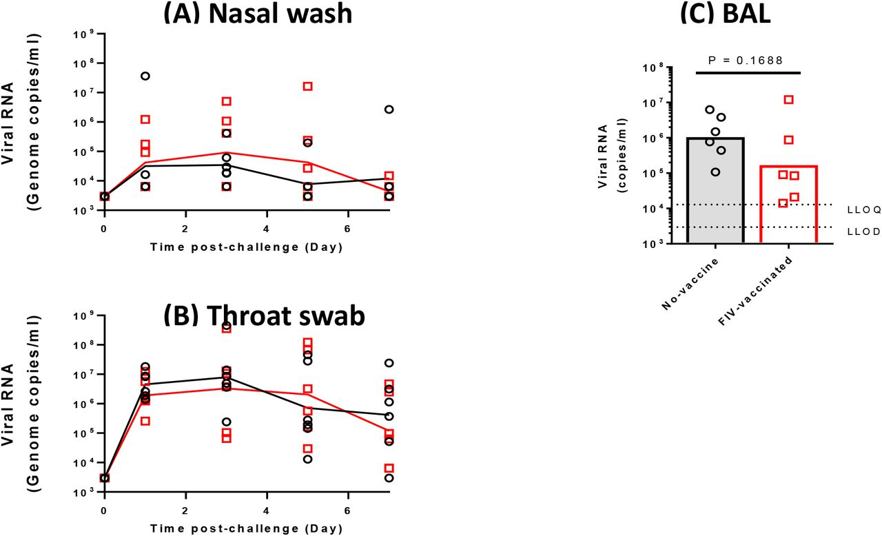 Detection of SARS-CoV-2 RNA in macaque respiratory samples. Viral RNA in unvaccinated and FIV-vaccinated macaques was quantified by RT-PCR in (A) nasal washes, (B) throat swabs and (C) bronchiolar lavage. Lines plotted are the geometric mean genome copies per mL.