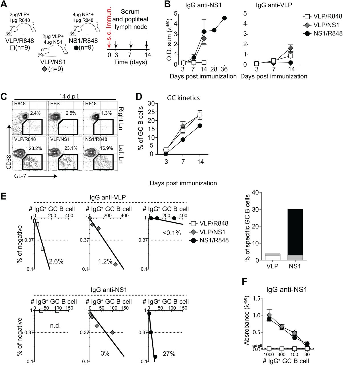 Antigen-specificity of B cells in germinal centers after immunization with ZIKV VLP and NS1. (A) Experimental design indicating the time points of foot pad subcutaneous immunization, serum samples and popliteal lymph nodes collections. (B) Kinetics of serum levels of IgG binding to ZIKV NS1 recombinant protein or ZIKV VLP, measured by ELISA. OD Sum is the sum of ODs of four serum dilutions (1:40, 1:120, 1:360 and 1:1080). ( C ) Representative plots of GC B cells (CD38 lo/− GL-7 + gated on B220 + CD138 − ) at day 14 post immunization. Mice were immunized in the left footpad. ( D ) Kinetics of frequency of germinal center (GC) B cells in left popliteal lymph nodes after immunization with NS1 (2 ug/mouse), VLP (2 ug/mouse) or both (4 ug of NS1 and 2 ug of VLP/mouse). Immunizations were adjuvanted with R848 (1ug/mouse). ( E ) GC B cells from popliteal lymph nodes of immunized mice were sorted and cultured in decreasing cells numbers/well (300, 100, 30, 10 cells/well). Supernatants were collected on day 7 and screened for IgG secretion by ELISA. Supernatants that revealed the presence of IgG were tested for antigen specificity by ELISA. Frequencies of IgG + GC B cells that bound VLP (upper panel) or NS1 (lower panel) were calculated utilizing Poisson distribution and are summarized on the right graph. Cell culture was performed on a monolayer of gamma-irradiated (20 Gy) NB40L feeder cells (3 × 10 3 cells/well), LPS (30 μg/mL) and IL-21 (2 ng/mL). ( F ) OD of IgG + supernatants of different cell numbers/well binding to ZIKV NS1, measured by ELISA.