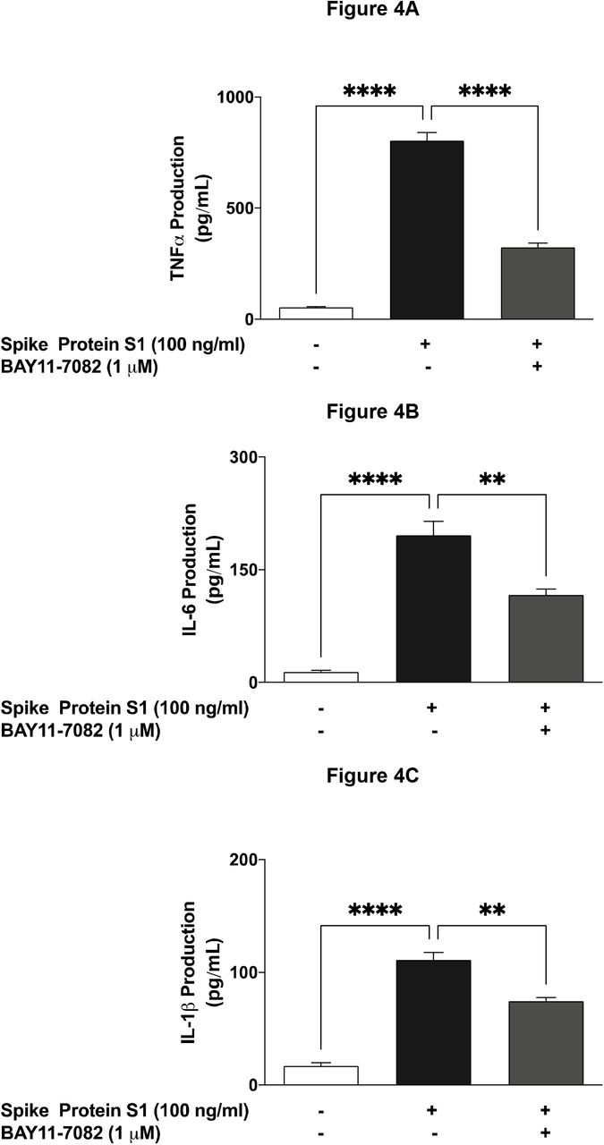 Pre-treatment with BAY11-7082 (1 µM) resulted in inhibition of SARS-CoV-2 spike S1 glycoprotein-induced increased production of TNFα (A), IL-6 (B) and IL-1β (C) in BV-2 microglia. Culture supernatants were analysed using ELISA following stimulation for 24 h. Data were analysed using One-way ANOVA followed by a post hoc Tukey's multiple comparison test. **p□