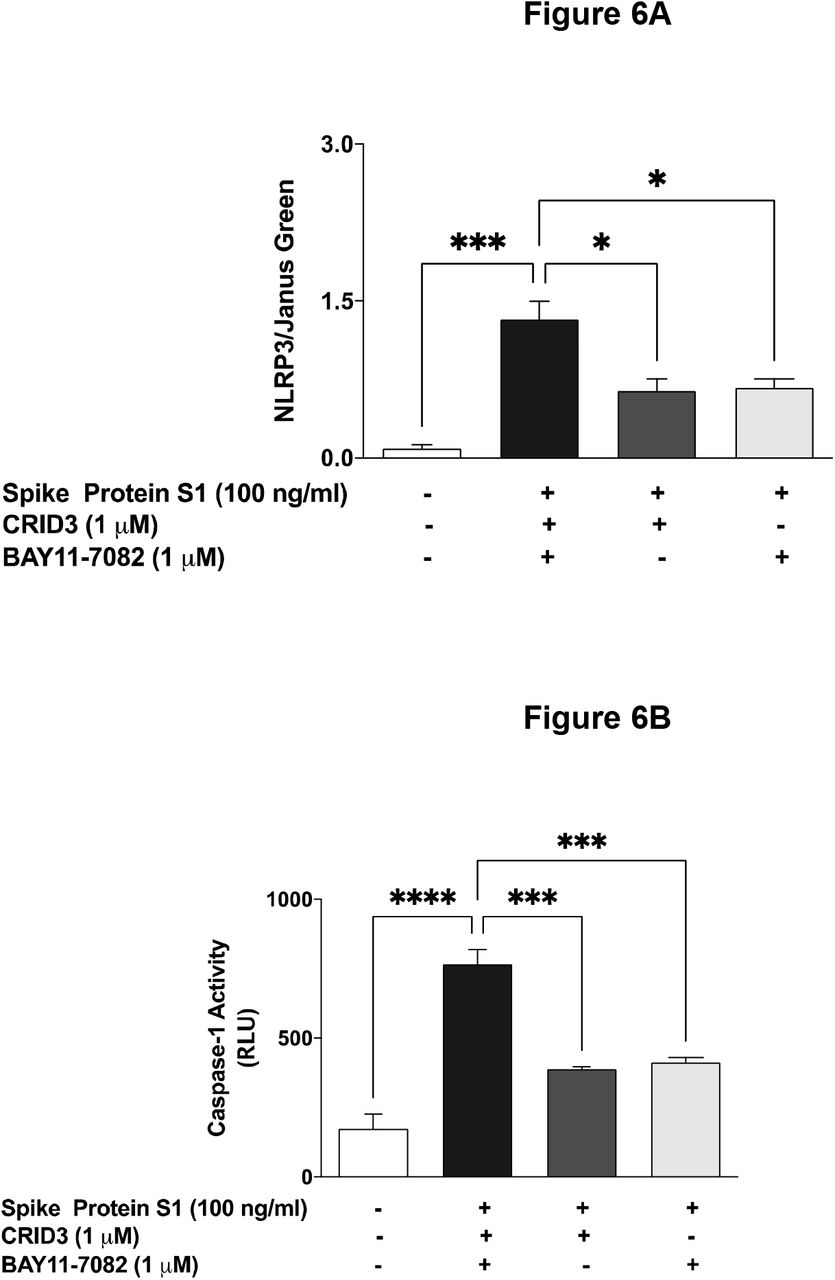 (A) Stimulation of BV-2 microglia with SARS-CoV-2 spike S1 glycoprotein (100 ng/mL) increased protein expression of NLRP3 inflammasome, which was inhibited in the presence of CRID3 (1 µM) and BAY11-7082 (1 µM). (B) Increased caspase-1 activity by SARS-CoV-2 spike S1 glycoprotein (100 ng/mL) BV-2 microglia was reduced in the presence of CRID3 (1 µM) and BAY11-7082 (1 µM). Data were analysed using One-way ANOVA followed by a post hoc Tukey's multiple comparison test. *p
