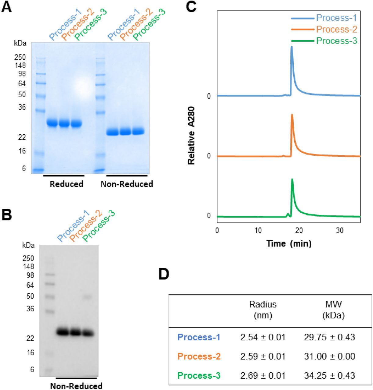 Characterization of purified RBD219-N1C1 proteins from three processes. (A-B) Purified proteins are analyzed by SDS-PAGE gel with Coomassie Blue stain (A) and Western blot with a monoclonal SARS-CoV-2 Spike antibody (B). (C-D) Size and aggregates evaluation by SEC-HPLC (C) and the radius and size in solution measured by Dynamic Light Scattering (D). (D) Averages ± SD are shown from four independent measurements.