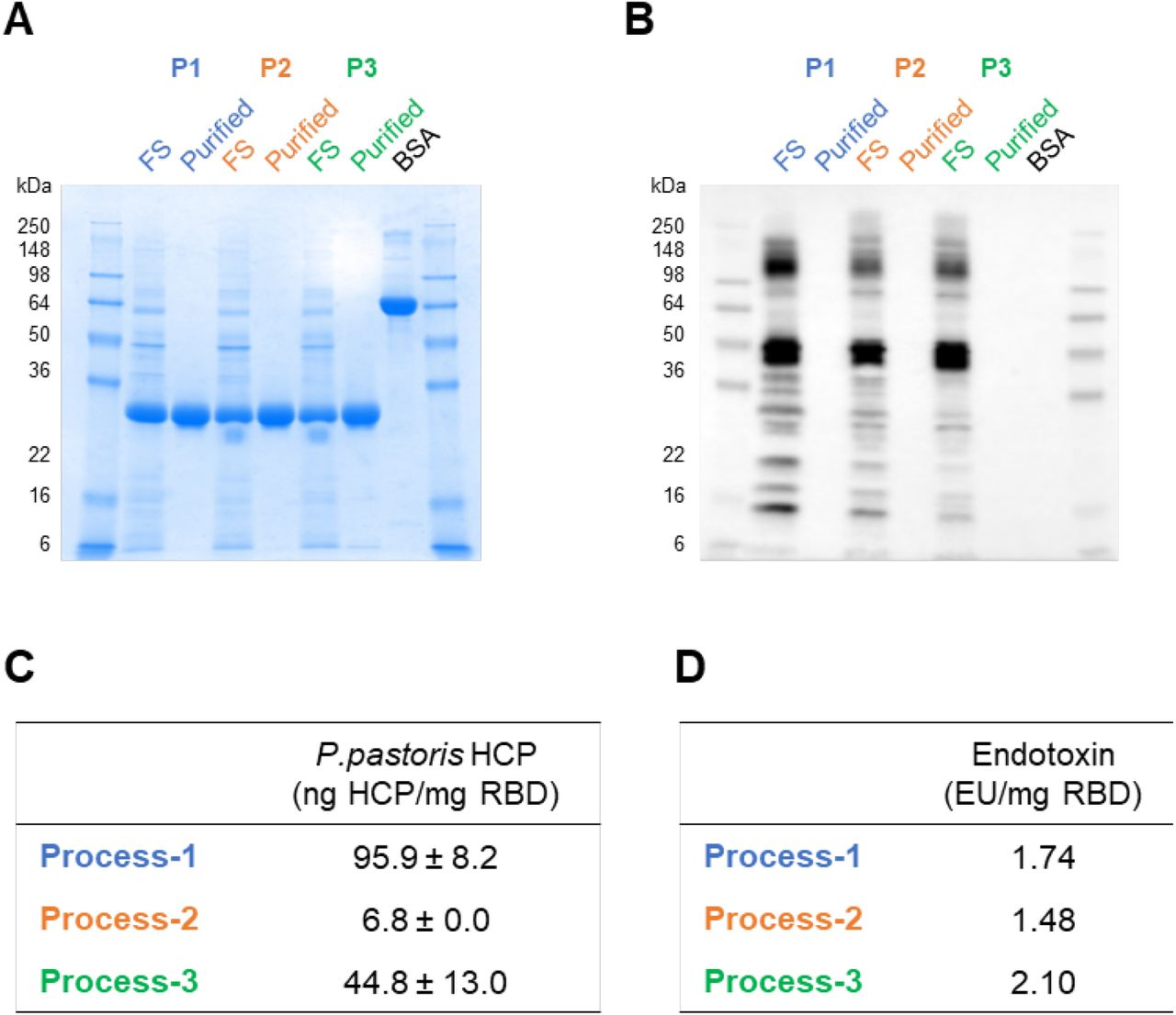 Impurity evaluation of the purified RBD219-N1C1 proteins from three processes. (A-B) Unpurified (FS) and purified RBD219-N1C1 in reduced SDS-PAGE with Coomassie Blue stain (A) and with Western blot using anti- P. pastoris HCP antibody (B). (C) Measured P. pastoris HCP content by quantitative ELISA and (D) endotoxin levels are shown.