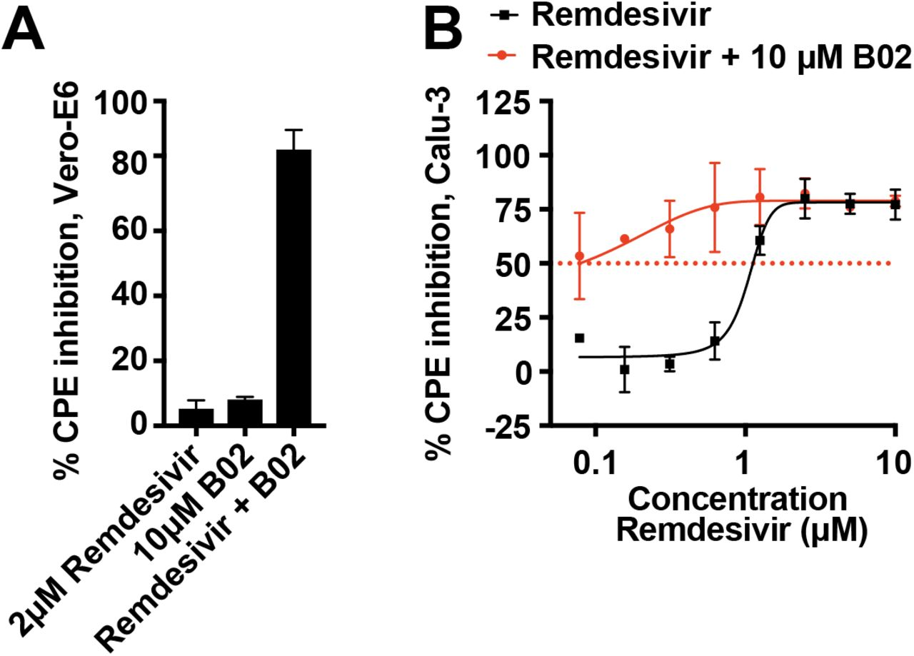 B02 synergy with remdesivir. (A) Vero-E6 cells were infected with SARS-CoV-2 at MOI 0.05 and treated with 2 μM remdesivir, 10 μM B02, or a combination of 2 μM remdesivir and 10 μM B02 for 72h. CPE inhibition was measured by CTG assay. (B) Calu-3 cells were infected with SARS-CoV-2 at MOI 0.05 and treated with remdesivir at indicated concentrations in the presence or absence of 10 μM B02 for 96h. CPE inhibition was measured by CTG assay and was normalized to DMSO-treated wells. Data represent mean ± SD for n = 2 technical replicates.