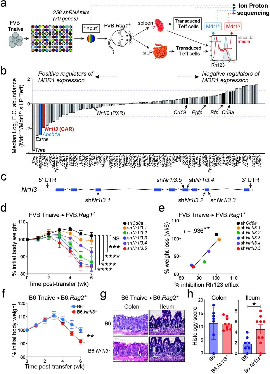 Car Nr1i3 Directs T Cell Adaptation To Bile Acids In The Small Intestine Biorxiv
