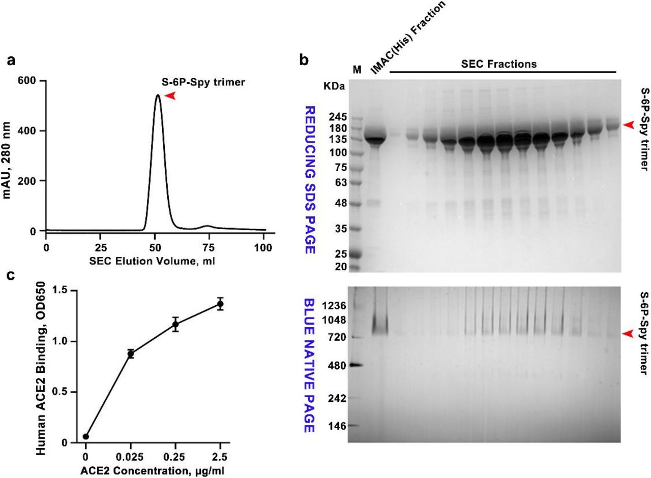 Purification and characterization of S-ecto-spytag trimers from ExpiCHO cells. a. Size-exclusion chromatography (SEC) elution profile of S-ecto-spytag (S-ecto-spy) trimers. HisTrap affinity purified S-ecto-spy protein from 250 ml of transfected ExpiCHO cells was loaded on Superdex 200 prep-grade SEC column. S-trimers yield was ~50 mg per 1 L culture. b . Reducing SDS-PAGE (top) and BLUE NATIVE-PAGE (bottom) patterns of SEC-purified trimer fractions. The molecular weight standards (M) in kDa are shown on the left of the gels. IMAC (Immobilized Metal Affinity Chromatography, His) fraction is the material from affinity purification of culture supernatant on a HisTrap column, which was then loaded on the SEC column. c. ELISA analysis showing binding of purified S-trimers to human <t>ACE2</t> at various ACE2 concentrations.