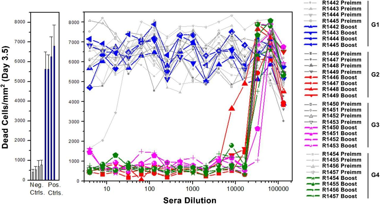 Virus neutralization titers of rabbit sera. Infection of Vero E6 cells by live SARS-CoV-2 US-WA-1/2020 was determined in the presence of rabbit sera at a series of two-fold dilutions starting from 1:4. Culture medium only and CoV-2 virus only were used as negative and positive controls, respectively. R1442 to R1457 refer to tag numbers of rabbits. The data in control groups were presented as means ± SD of 32 wells. The data in rabbit sera groups were shown as means of duplicates.