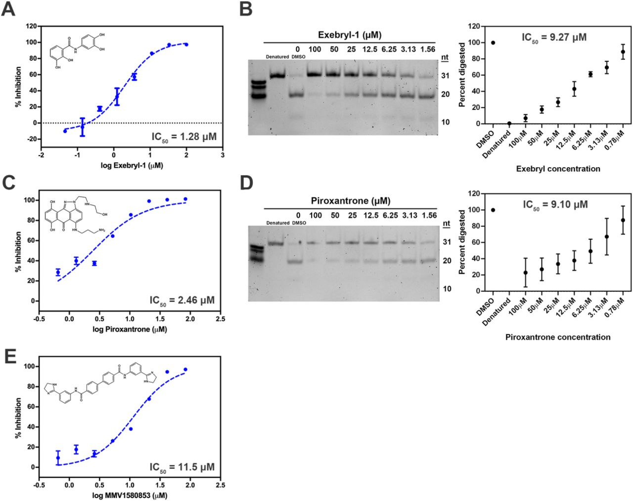 Dose response curves of select nsp15 hits. Inhibitor structures and 3° FRET assay dose-response curves with calculated IC 50 values for Exebryl-1 ( A ), Piroxantrone ( C ), and MMV1580853 ( E ). Nsp15 (25 nM) was incubated with 2-fold or 3-fold serial concentrations of compound and incubated with the substrate <t>5'6-</t> <t>FAM/dArUdAdA/3'-TAMRA</t> (0.5 μM) at ambient temperature for 1 h. Results of a polyacrylamide gel-based RNA cleavage assay for Exebryl-1 ( B ) and Piroxantrone ( D ). nsp15 (0.78 μM) and poly(rA) (500 ng) was incubated with 2-fold serial concentrations of each compound and incubated at ambient temperature for 2 h. Cleavage products were separated from uncleaved poly(rA) by electrophoresis on a 15% TBE-urea polyacrylamide gel and the % cleavage activity calculated by quantitating the relative amount of cleaved (20 nt lower band) vs uncleaved (31 nt top band) substrate in each sample relative to a DMSO control. Gel-based RNA cleavage inhibition of MMV1580853 was observed, but was variable from experiment to experiment, likely due to poor solubility in DMSO and assay buffer.