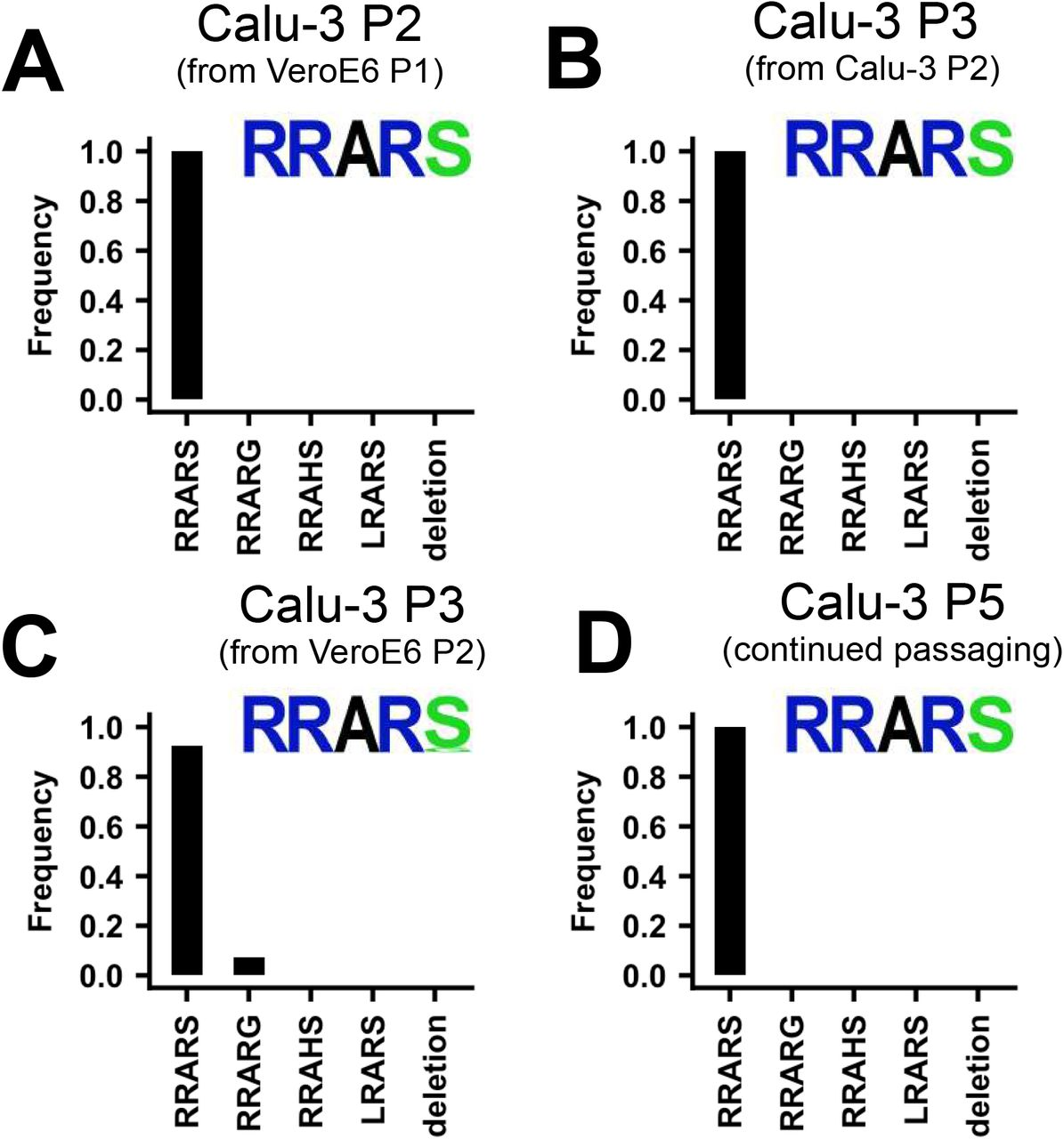 SARS-CoV-2 propagation in Calu-3 cells efficiently prevents SARS-CoV-2 cell culture adaptation. ( A ) Deep-sequencing analysis of Calu-3 passage 2 virus from a VeroE6 passage 1. ( B ) Deep-sequencing analysis of Calu-3 passage 3 virus from the Calu-3 passage 2 in A. ( C ) Deep-sequencing analysis of Calu-3 passage 3 virus grown from a VeroE6 passage 2 stock ( Figure 1A ). Deep-sequencing analysis of Calu-3 passage 5 virus from a Calu-3 passage 3 stock in C. In each graph the amino acid sequence logo of the multibasic cleavage site is shown.