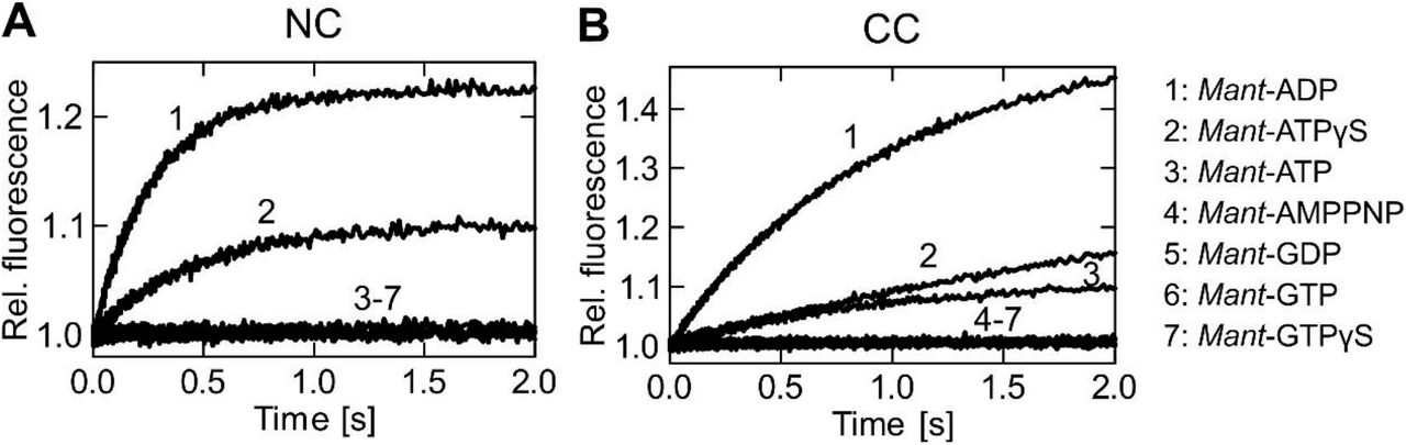 Nucleotide specificity of the hBrr2 cassettes. A and B . Time courses of mant -nucleotide binding to 0.5 μM nucleotide-free hBrr2 NC ( A ) and hBrr2 CC ( B ) measured by FRET from Trp to mant. 1, mant -ADP (5 μM); 2, mant -ATPγS (5 μM); 3, mant -ATP (5 μM); 4, mant -AMPPNP (5 μM); 5, mant -GDP (5 μM); 6, mant -GTP (5 μM); 7, mant -GTPγS (5 μM). The hBrr2 cassettes bind mant -ADP and mant -ATPγS but do not interact with mant -AMPPNP or mant -G nucleotides.