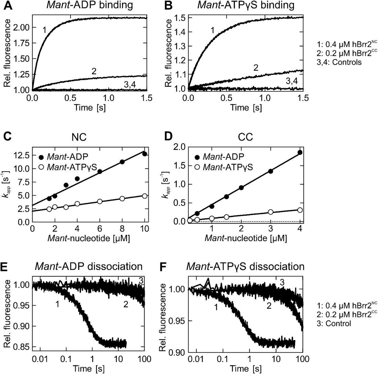 Kinetics of mant-ADP and mant -ATPγS interaction with hBrr2 NC and hBrr2CC. A and B . Time courses of 5 μM mant -ADP ( A ) or man t-ATPγS ( B ) binding to hBrr2 NC (1; 0.4 μM) and hBrr2CC (2; 0.2 μM) measured by FRET from Trp to mant . Controls correspond to binding experiments with unlabeled ADP or ATPγS (3 and 4). C and D . Individual nucleotide binding traces were fitted to single exponentials and the dependencies of the apparent rate constants on nucleotide concentration for hBrr2 NC ( C ) and hBrr2CC ( D ) were fitted by a linear equation, k app = k 1 [mant-nucleotide]+ k- 1 , in which k 1 is derived from the slope and k- 1 from the Y-axis intercept. Closed circles, mant -ADP; open circles, mant -ATPγS. Values represent means ± SD of at least three independent measurements. E and F . Dissociation of 5 μM mant -ADP ( E ) or mant -ATPγS ( F ) from hBrr2 NC (1; 0.4 μM hBrr2 NC ) and hBrr2 CC (2; 0.2 μM) in the presence of the respective unlabeled nucleotide in excess (100 μM). Control experiments (3) were carried out in the absence of unlabeled nucleotide (curves shown are for hBrr2 CC ).