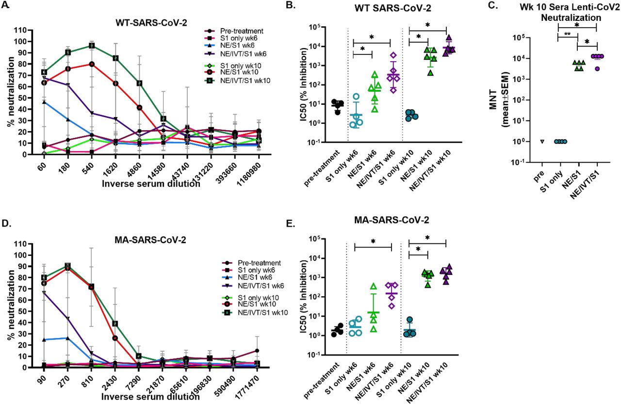 Neutralizing antibody titers in serum from mice receiving two (wk 6) or three (wk 10) immunizations mice were determined using microneutralization assays against the WT SARS-CoV-2 (2019-nCoV/USA-WA1/2020), pseudotyped lentivirus expressing the WT SARS-CoV-2 spike protein (Lenti-CoV2), and MA SARS-CoV-2. Viral neutralization was plotted as percentage inhibition of viral infection in Vero E6 cells (for WT virus and MA-virus) relative to virus only (no serum) positive controls versus the inverse serum dilution. The titer at which 50% inhibition of infection was achieved (IC50) was determined for the (A, B) WT virus and the (D, E) MA virus. (C) The results were confirmed for the same week 10 serum samples using the Lenti-CoV2 pseudovirus expressing firefly luciferase with HEK-293T cells expressing hACE2. Microneutralization titers using the Lenti-CoV2 were determined by detecting viral infection by measuring luminescence (*p