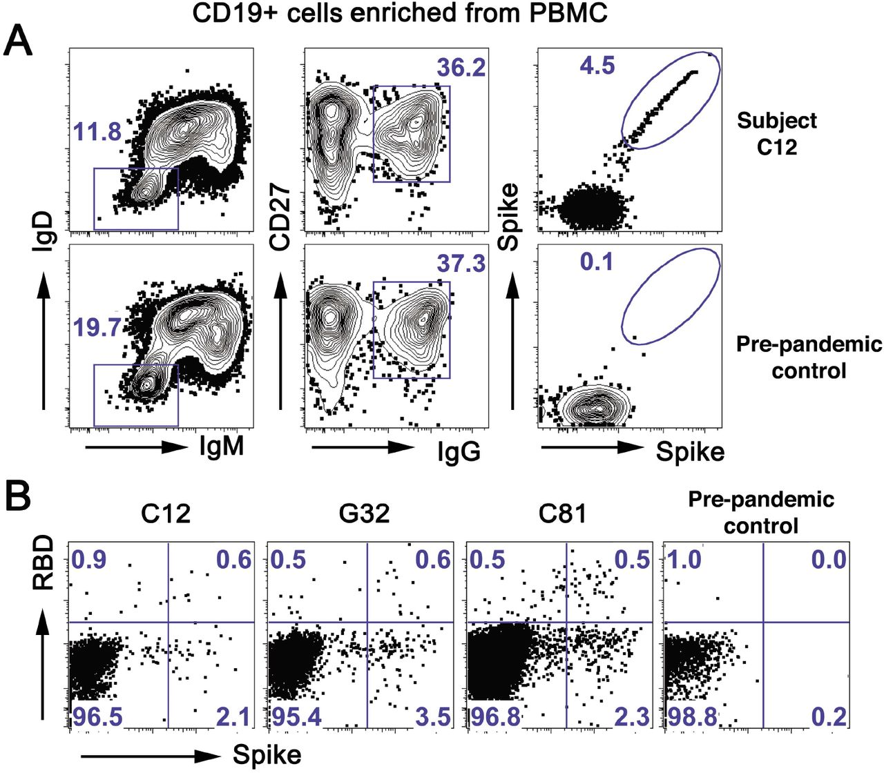 Sorting strategy for SARS-CoV-2 specific memory B cells. ( A ) Representative flow cytometry plots showing CD19 + , CD27 + , SARS-CoV-2 spike-binding B cells from a convalescent subject (C12, top row) and a pre-pandemic control (bottom row). PBMCs were pre-enriched with CD19 magnetic beads then gated on live IgD - IgM-IgG + CD27 + and finally on spike ( B ) Representative flow cytometry plots showing spike-positive, RBD-negative B cells for three convalescent subjects and a pre-pandemic control, sorted as in (A) except for the spike gate.
