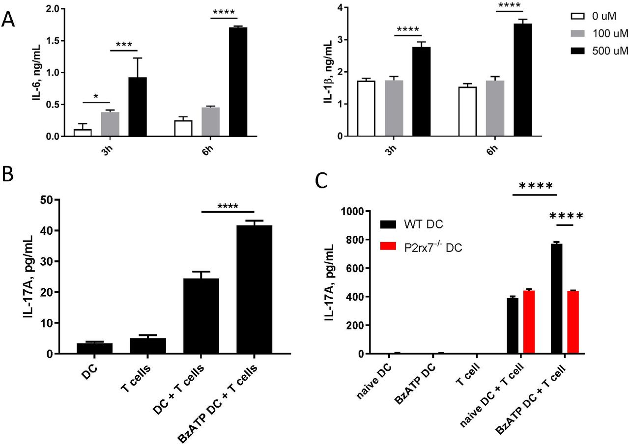 Stimulation of P2X7R on DCs can promote IL-17 production in vitro . (A) Mouse BMDCs derived from C57BL/6J mice were stimulated with the indicated doses of BzATP and supernatants were collected at 3h and 6h to determine IL-6 and IL-1β production by ELISA. (B) Mixed leucocyte reaction (MLR) was induced by cocultering BMDCs derived from C57BL/6J, pretreated with 300μM BzATP or left untreated (controls), with naive CD4 + T cells isolated from BALB/cJ for 4 days. Supernatants were collected and L-17A levels assessed by ELISA. (C) BMDCs derived from WT or P2rx7 -/- mice, pretreated with BzATP or left untreated (controls), were cocultured with naive CD4 + T cells from BALB/cJ for 4 days. Supernatants were collected to determine IL-17A by ELISA. Results shown as mean ± SEM. Results are one representative of three independent experiments. *p