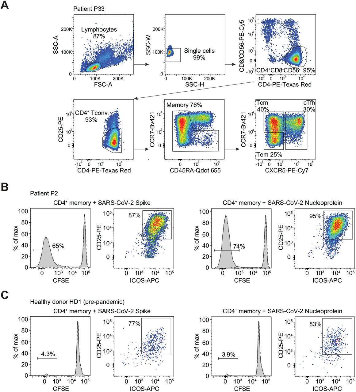 Sorting of T cell subsets and identification of SARS-CoV-2 Spike- and Nucleoprotein-reactive CD4 + T cells in COVID-19 and pre-pandemic samples. ( A ) Sorting strategy to isolate CD4 + total memory T cells and Tcm, Tem and cTfh subsets. ( B, C ) Characterization of antigen-specific T cells by CFSE dilution combined with CD25 and ICOS co-expression at day 7 following stimulation with Spike or Nucleoprotein in the presence of autologous monocytes. Negative controls of T cells cultured with monocytes alone are reported as dashed lines. Shown are data from patient P2 and from a pre-pandemic healthy donor sample (HD1).