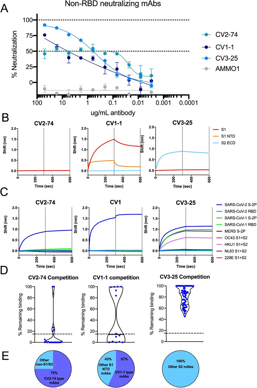 mAb epitope mapping and cross-reactivity BLI. Related to Figure 3. The binding of the 198 SARS-CoV-2-specific mAbs was assessed by BLI for epitope and cross-reactivity. (A, B) All spike-specific mAbs isolated from COVID+ donors were tested by BLI for binding to SARS-CoV-2 S2P (A) and SARS-CoV-2 RBD (B). (C-H) The number of amino acid mutations (sum of heavy chain and light chain mutations) for each for each SARS-CoV-2 mAb that bound (blue dots) or didn't bind (teal dots) SARS-COV-1 S-2P (C), SARS-COV-1 RBD (D) , MERS S-2P (E) , OC43 (F) , HKU1 (G) , NL63 (H) , or 229E (EI) . Statistics were assessed by Mann-Whitney test, no comparisons were significant.