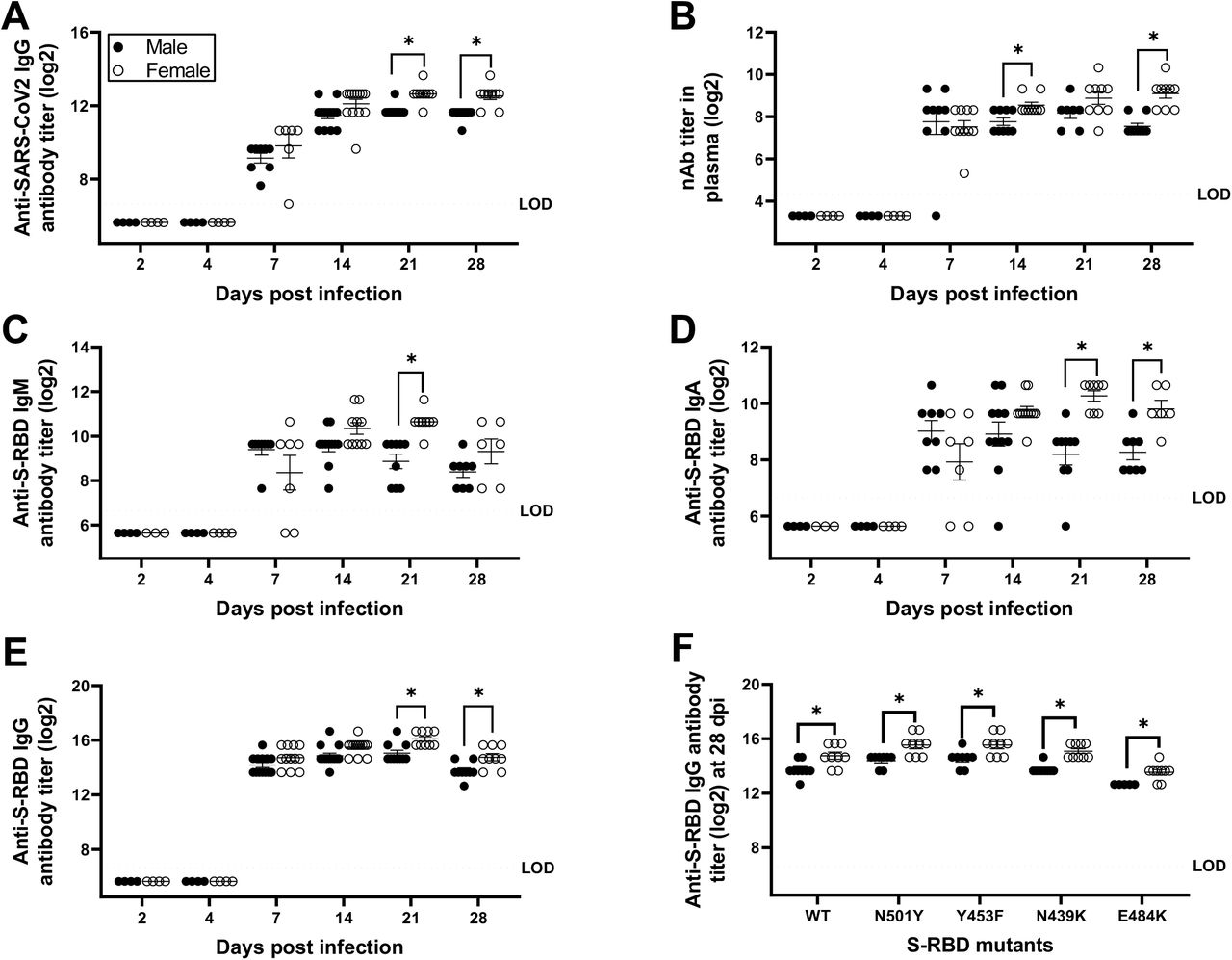 Antibody responses in the plasma of SARS-CoV-2 infected female hamsters were greater than males. Plasma samples were collected at different dpi and IgG antibody responses against whole inactivated SARS-CoV-2 virions (A); virus neutralizing antibody responses (B); and S-RBD-specific IgM (C), IgA (D), and IgG (E) antibodies were determined. Likewise, cross-reactive IgG antibodies against mutant S-RBDs (viz. N501Y, Y453F, N439K, and E484K) were evaluated in plasma at 28 dpi (F). Considering similar antibody responses at 6 and 7 dpi, values were presented together as 7 dpi. Data represent mean ± standard error of the mean from two independent experiments (n = 4-14/group/sex) and significant differences between groups are denoted by asterisks (*p