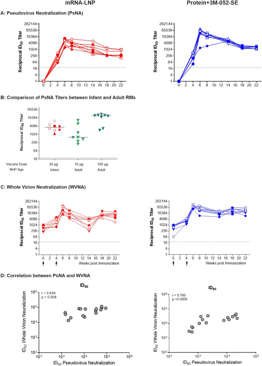 Spike-specific CD8 + T cell responses in SARS-CoV-2 immunized infant macaques. Intracellular cytokine staining was performed as described in Figure 5 at weeks 0, 6, 4, 8, and 14 to assess CD8 + T-cell responses. Panels A, B, C and D show responses detected in PBMC from the mRNA-LNP group at weeks 4, 6, 8, and 14, respectively. Panels E, F, G and H show responses in Protein+3M-052+SE vaccinees at weeks 4, 6, 8 and 14, respectively. The legend and symbols used mirror those from Figure 6 (see also Table S1 ). Dotted lines represent the cut-off for cytokine-positive responses, determined as 2 standard deviations above median values of SARS-CoV-2 naïve animals.