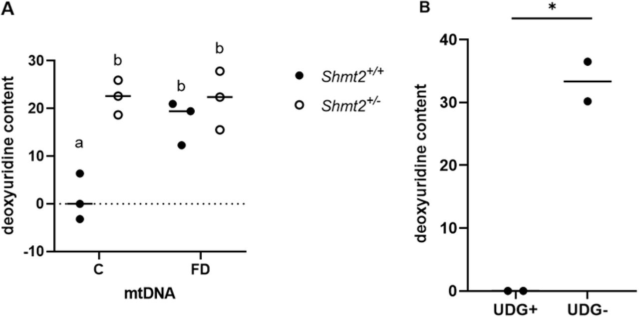 Uracil content in Shmt2 +/+ and Shmt2 +/- mouse liver mtDNA. A) Uracil content in Shmt2 +/+ and Shmt2 +/- mouse liver mtDNA from male mice consuming the C or FD diet for 7 weeks and B) Uracil content both before and after UDG treatment. The content represents total uracil in each region. Two-way ANOVA with Tukey's post-hoc analysis was used to determine diet by genotype interaction and main effects of diet and genotype and data are normalized to the Shmt2 +/+ mice on control diet in panel A. Statistical significant was determined for genotype (*), diet (**), and diet by genotype interaction (***). Levels not connected by the same letter are significantly different, n = 3 per group. Student's t-tests were used to analyze data in panel B. Data represent means ± SD. P values ≤ 0.05 were considered significantly different. n = 2 per group. * indicates statistical significant. C, control; FD, folate deficient; SHMT2, serine hydroxymethyltransferase 2; UDG, uracil dna glycosylase.