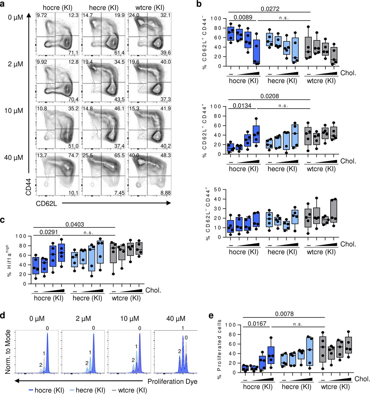 TCAIM-dependent expression of metabolism controlling genes in activated CD8 + T cells. ( a ) Myc and Hif1α <t>mRNA</t> expression of naïve and polyclonally activated CD8 + T cells with TCAIM KI, KO or wt gene expression (KI and wt: n = 3; KO: n = 2). <t>RNA-seq</t> raw count data of protein-coding genes were normalized and log 2 -transformed after adding a pseudocount to each value. Cells had been stimulated with 5 µg/ ml plate-bound αCD3 and 2 µg/ ml soluble αCD28 at a density of 6 x 10 5 cells/ 200 µl culture medium. Quantitative data represents means ± SEM. ( b ) Overview of the differentially expressed enzymes controlling the glycolysis, TCA cycle and glutaminolysis pathway between 24 to 48 h polyclonally activated TCAIM KI and wt CD8 + T cells (log 2 fold change). P-values have been adjusted to either 0.05 or 0.3 as indicated (n = 3). White areas indicate p-values exceeding the adjusted ones. Cells had been stimulated with 5 µg/ ml plate-bound αCD3 and 2 µg/ ml soluble αCD28 at a density of 6 x 10 5 cells/ 200 µl culture medium (a-b).