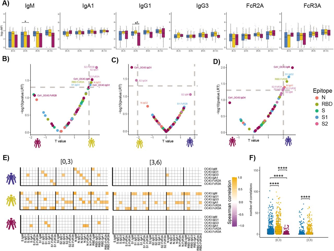 The temporal evolution of the human OC43 specific humoral immune response. (A) The whisker bar graphs show the distribution of human OC43 receptor binding domain (RBD)-specific antibody titers and OC43-specific antibody mediated Fc-receptor binding profiles across moderate, severe, and non-survivor COVID-19 groups over the study time course. The solid black line represents the median and box boundary (upper and bottom). (B-D) The volcano plots show the pairwise comparisons across the three COVID-19 severity groups, (A) individuals that passed away within 28 days (deceased) vs. severe survivors; (B) subjects who experienced moderate disease vs. severe survivors; (C) subjects who ultimately passed away (deceased) vs. subjects who developed moderate disease, including human OC43 RBD-specific humoral immune data. (E) The correlation heatmap shows the pairwise Spearman correlation matrices between OC43-specific and SARS-CoV-2 antibody levels across three COVID-19 severity groups (moderate, severe, and non-survivors) across the study time course. The correlation coefficients were shown only if statistically significant (adjust p -value