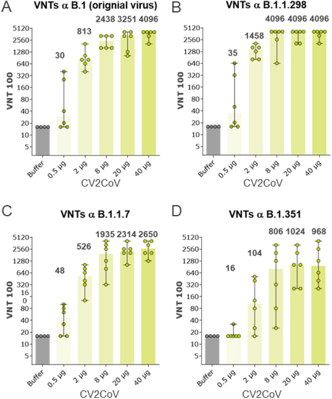 CV2CoV induces high titres of cross neutralising antibodies (VNT) against SARS-CoV-2 variants in rats. Female and male Wistar rats (n=6/group) were vaccinated IM with five different doses ranging from 0.5 μg – 40 μg of CV2CoV on day 0 and day 21. Animals (n=4) vaccinated with NaCl (Buffer) served as negative controls. SARS-CoV-2 100% neutralization titres (VNT100) in serum samples taken on day 42 against distinct SARS-CoV-2 variants were analysed as indicated. Highest dilution step was 1:4096. Each dot represents an individual animal, bars depict the median.