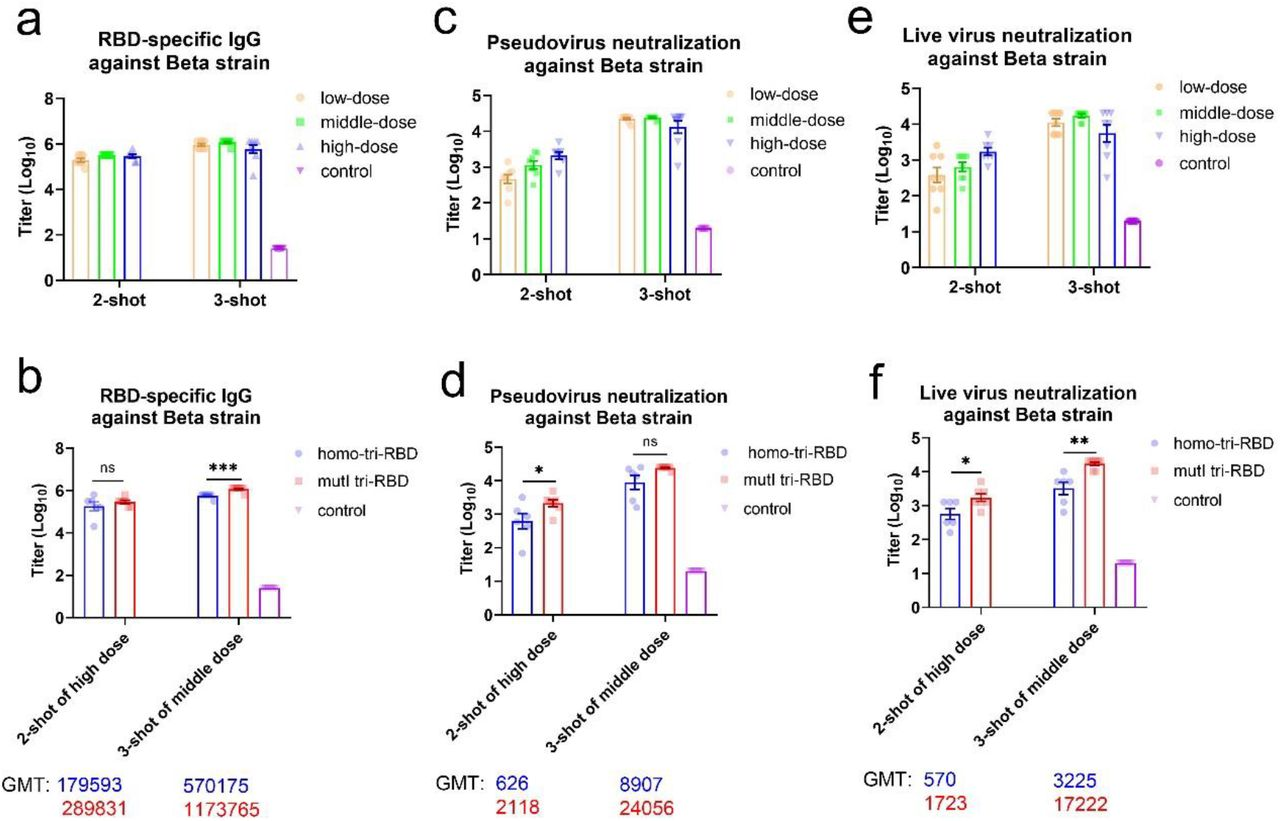 Immune responses against the Beta (B.1.351) strain of SARS-CoV-2 elicited by mutI tri-RBD in mice compared with those induced by homo-tri-RBD. a. Dose-dependent responses of RBD-specific IgG against the Beta (B.1.351) SARS-CoV-2 strain elicited by mutI tri-RBD. The levels of IgG were detected with ELISA by using monomeric RBD of Beta (B.1.351) strain. b. The levels of RBD-specific IgG against the Beta (B.1.351) strain induced by mutI tri-RBD compared with those induced by homo-tir-RBD. c. Dose-dependent responses of neutralizing antibodies against SARS-CoV-2 pseudo-virus of the Beta (B.1.351) strain elicited by mutI tri-RBD. The titers of neutralizing antibodies were assessed by using the pseudo-virus neutralization assays. d. The titers of neutralizing antibodies against the pseudo-virus of Beta (B.1.351) strain induced by mutI tri-RBD in contrast with those induced by homo-tri-RBD. e. Dose-dependent responses of neutralizing antibodies against the live Beta (B.1.351) SARS-CoV-2 virus strain elicited by mutI tri-RBD. The titers of neutralizing antibodies were assessed by using the live virus neutralization assays. f. The titers of neutralizing antibodies against the live virus of Beta (B.1.351) strain induced by mutI tri-RBD in contrast with those induced by homo-tri-RBD. Data are presented as means±SEMs. P values were calculated with Student's t-test. *P