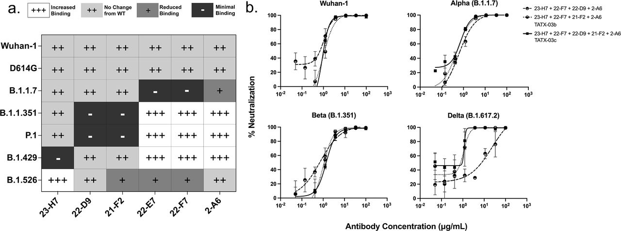 In vitro screening of Abs against <t>SARS-CoV-2</t> variants of concern. (a) Binding to cell-associated spike trimer with the hallmark mutations of the specified variants. (b) ELISA results to plate-adsorbed recombinant spike proteins and (c) heat map summary of ELISA-based reactivity profiles.